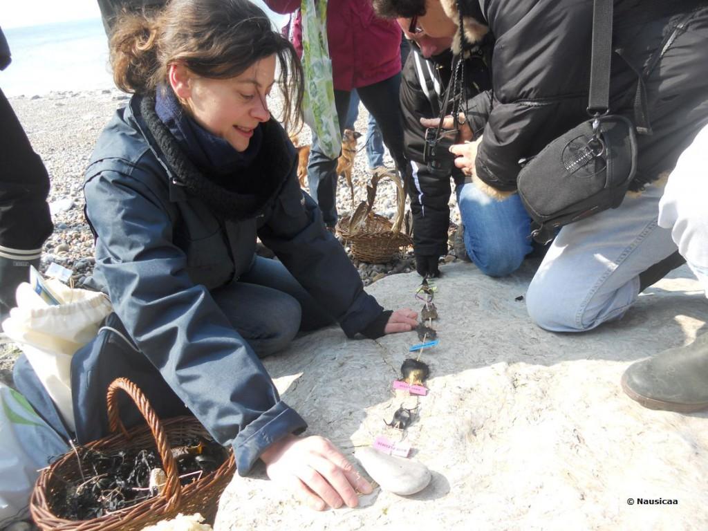 sciences participatives Nausicaa capsules oeufs de raie CapOera